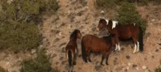 Wild Horse Mesa Placitas NM