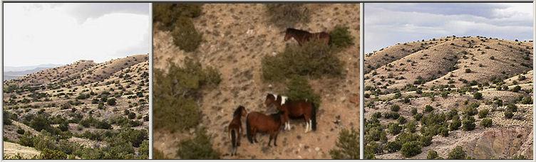 Wild Horse Mesa Placitas New Mexico