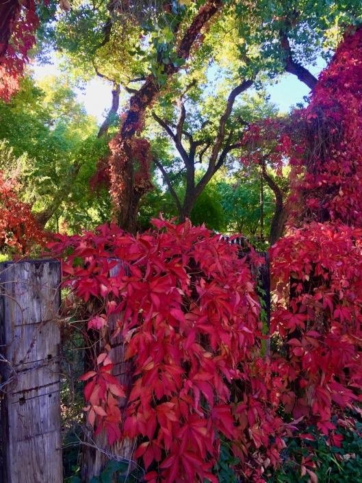 Corrales New Mexico Landscape